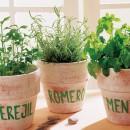 Imagen vía: Plantas aromáticas casi