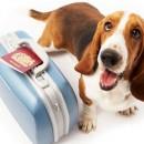 foto-perro-viaje